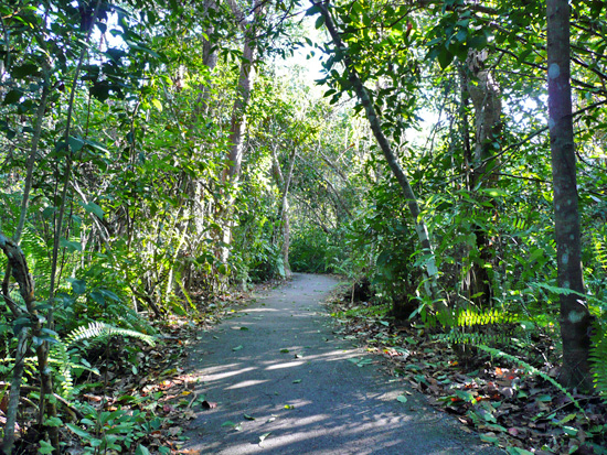The Gumbo Limbo Trail is named after the Gumbo Limbo Tree, known for its peeling bark