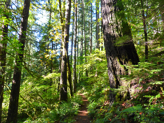 Deep woods travel on the Herman Creek Trail