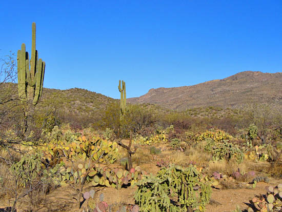 Cacti and cholla gardens on the North Hope Trail